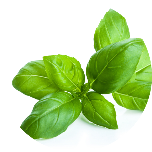 BasilUsed in folk medicine, its nutrients help with daily ailments