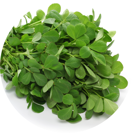 FenugreekFenugreek is commonly used to help with inflammation and  diabetes