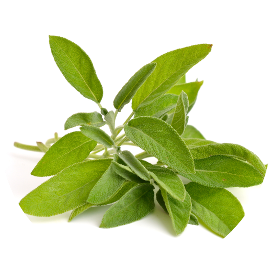 SageThanks to its stimulating properties, sage can be used as a tonic/detoxifyer